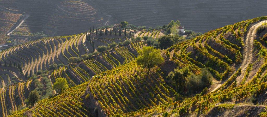 vineyards near porto