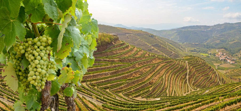 best wineries near lisbon