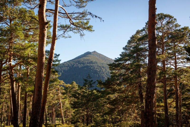 Walk Through Green Forests In Our Sierra De Guadarrama Hiking & Segovia Tour