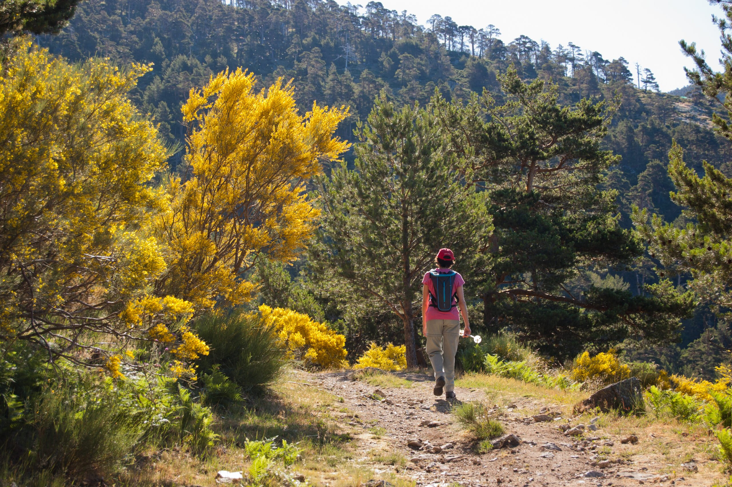 Walk Through Scot Pine Forests In Our Madrid Hiking Tour