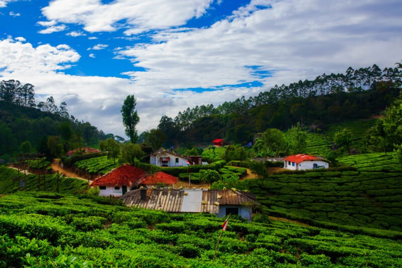 5 Day Ecology & Culture Tour Of Munnar From Kochi - Day 1
