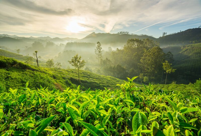 5 Day Ecology & Culture Tour Of Munnar From Kochi - Day 2