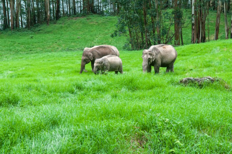 5 Day Ecology & Culture Tour Of Munnar From Kochi - Day 3
