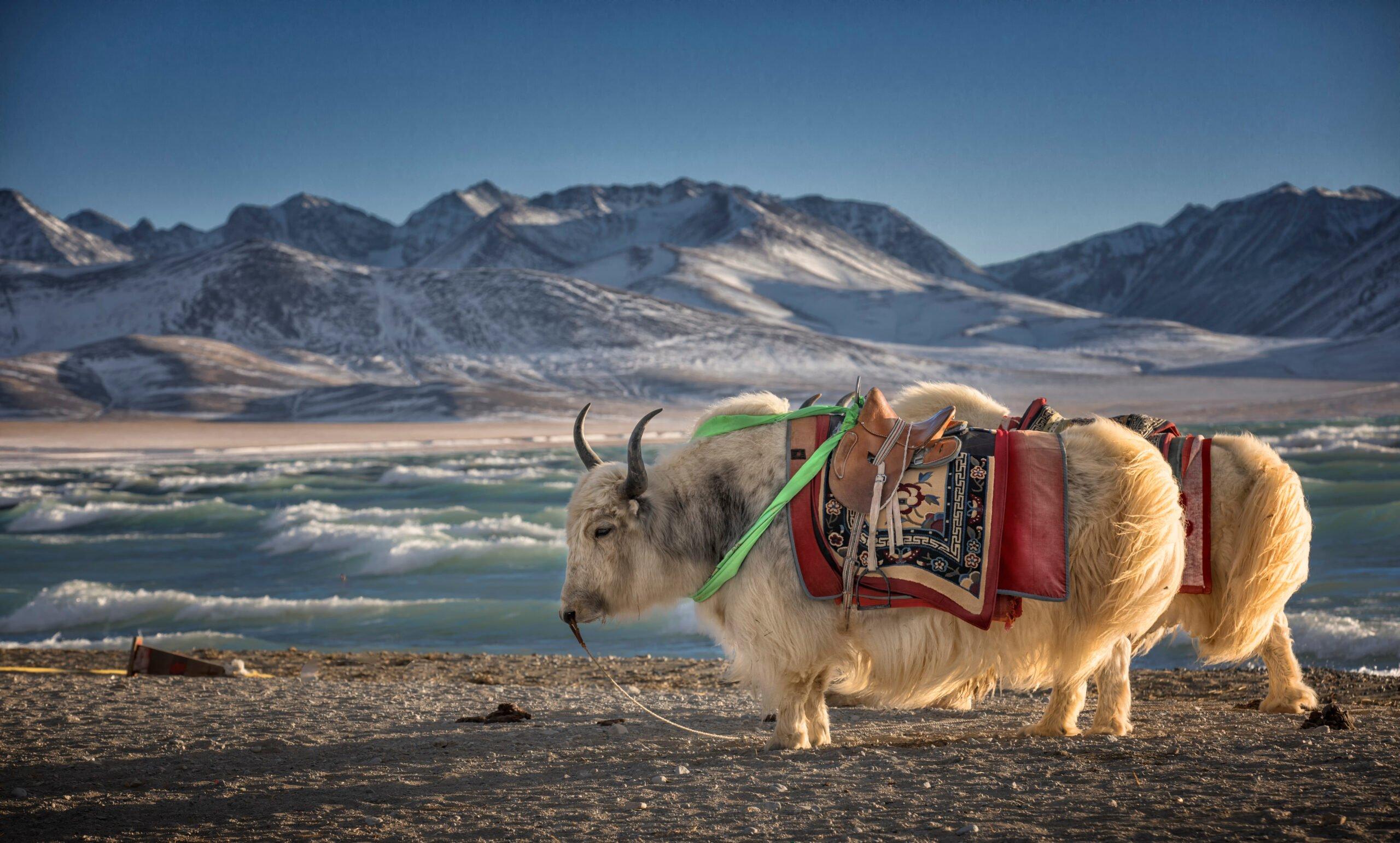 8 Day Classic Tibet Tour.