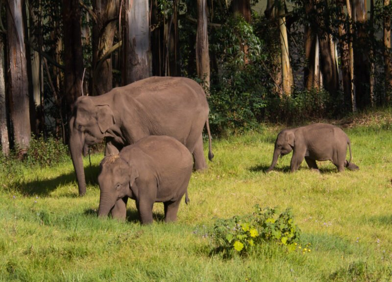 Explore Munnar Wildlife In Our 5 Day Ecology & Culture Tour Of Munnar
