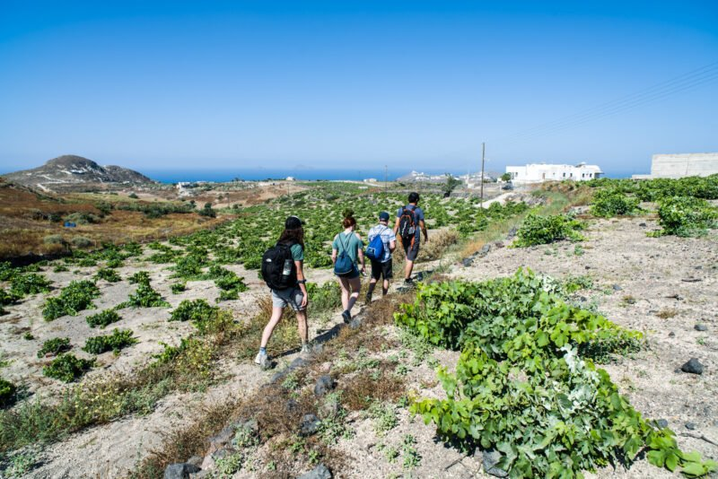 Pass Through The Beautiful Vineyards Of Santorini On The Hiking, Snorkeling & Cooking Experience In Santorini_92
