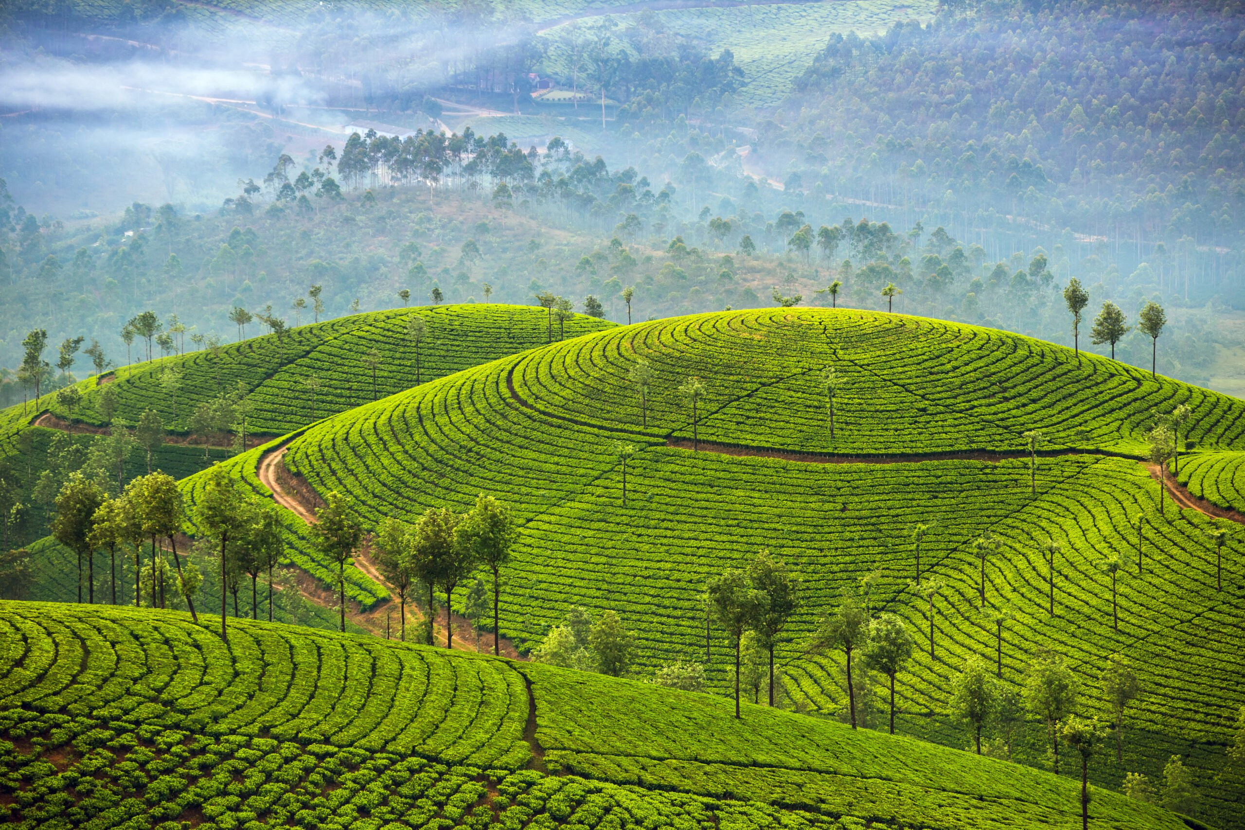 Amazing Views In Our 5 Day Ecology & Culture Tour Of Munnar