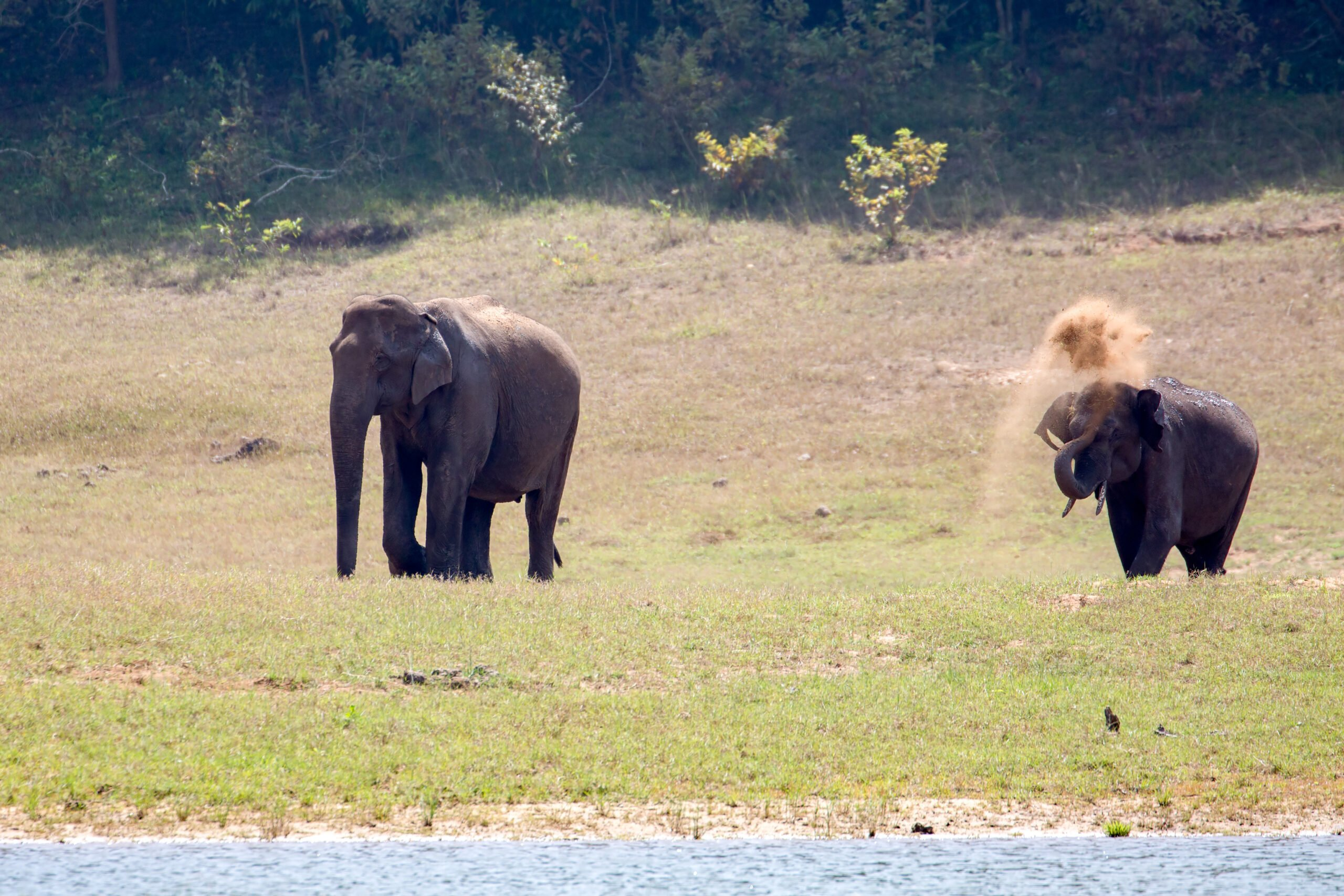 Amazing Wildlife Experience In Our 3 Day Wildlife And Culture Tour Of Thekkady From Kochi