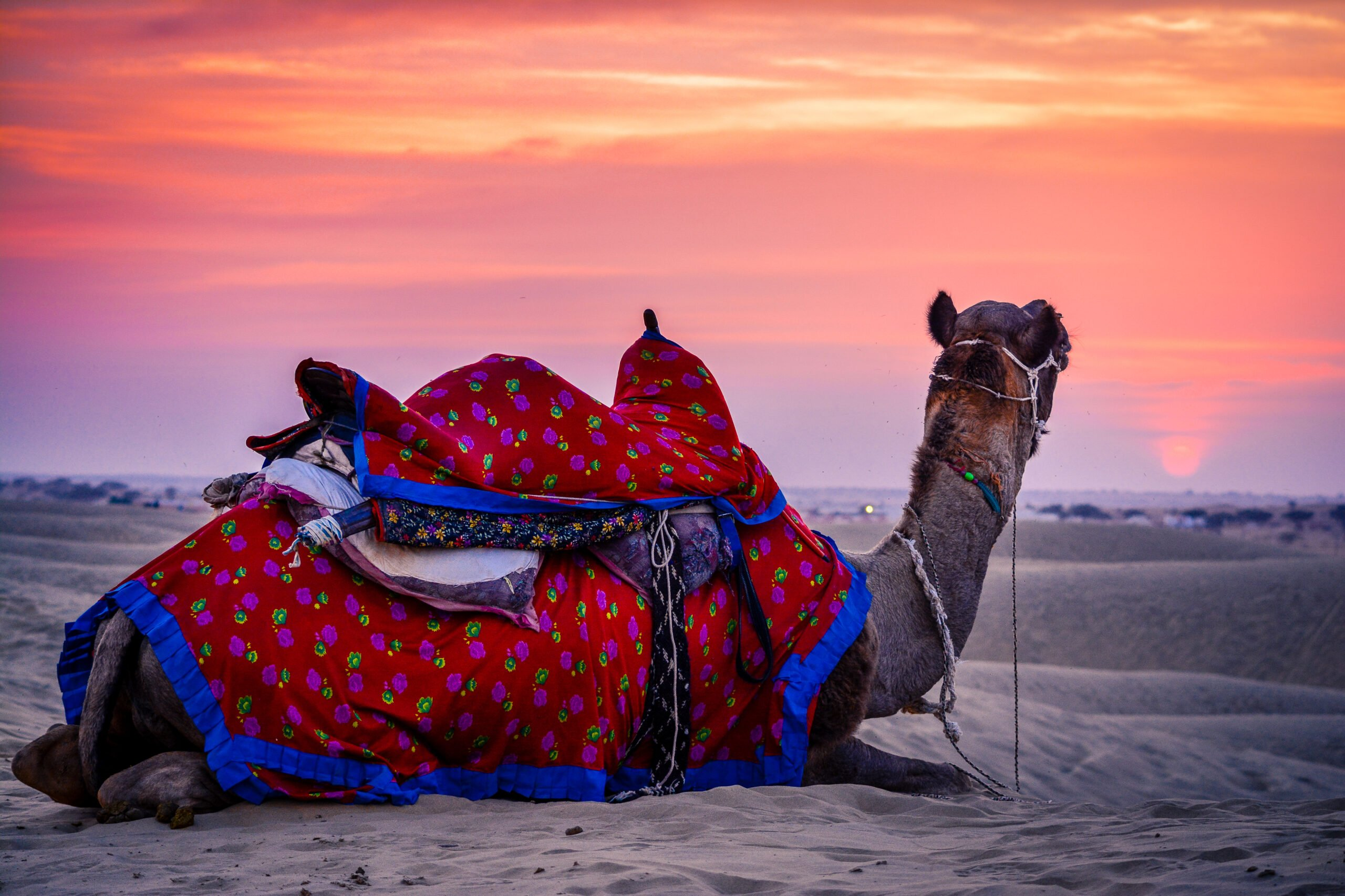 Explore Rajasthan In Our 5 Day Best Of Rajasthan Including Taj Mahal