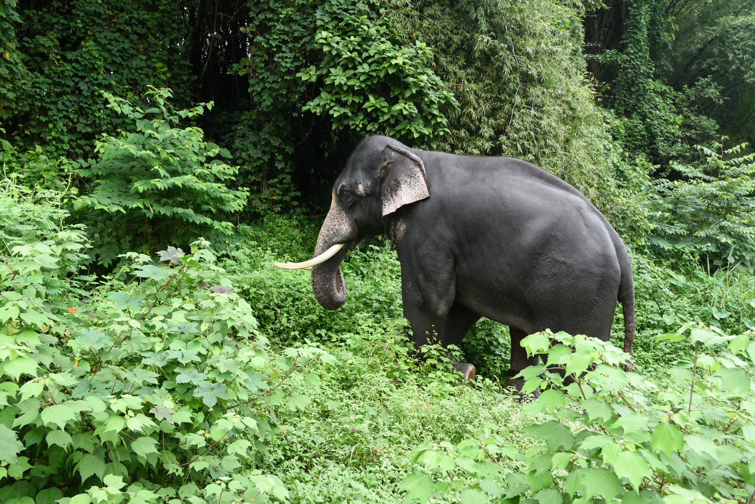 Explore Kerala Wildlife In Our 3 Day Wildlife And Culture Tour Of Thekkady From Kochi