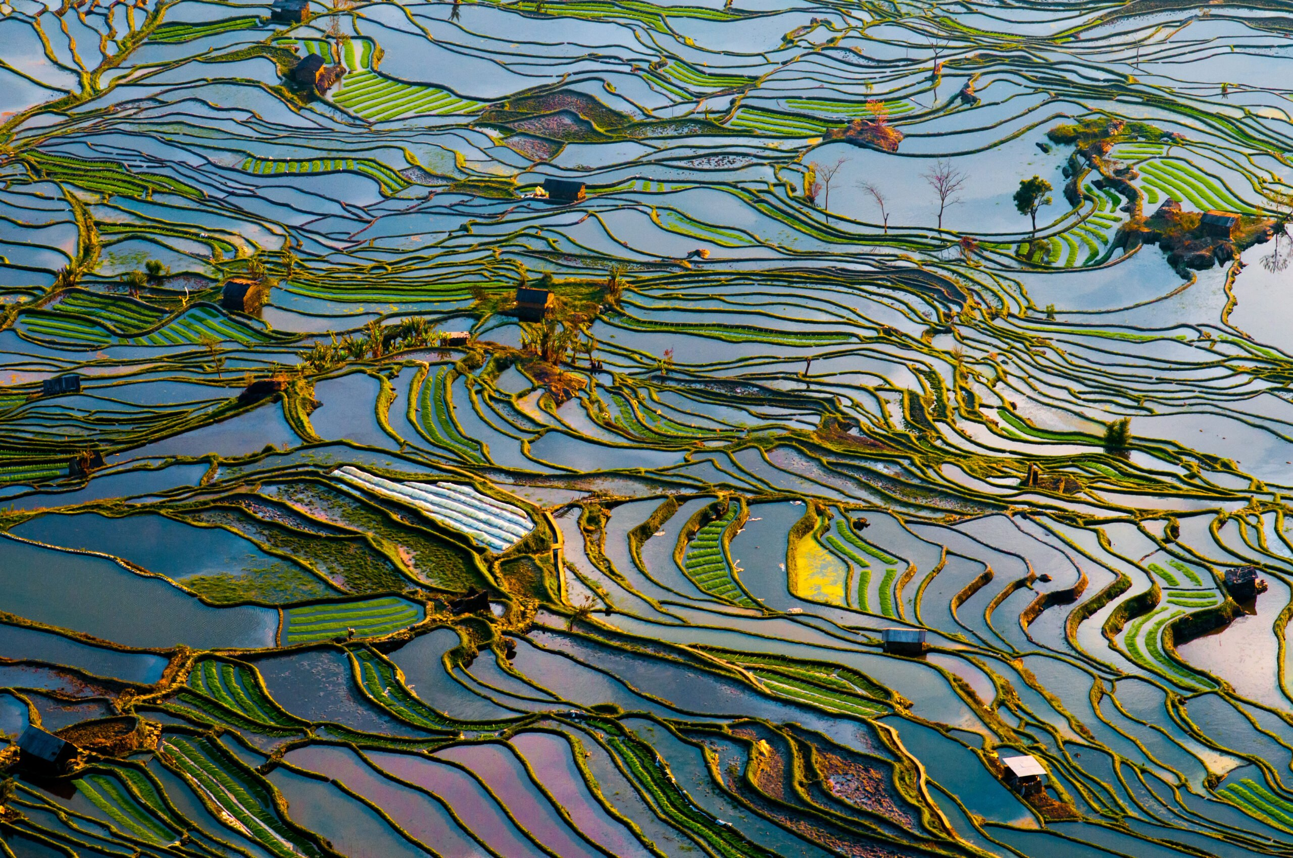 Learn About Yuanyang Hani Rice Terraces In Our Jianshui And Yuanyang Hani Rice Terraces 3 Day Package