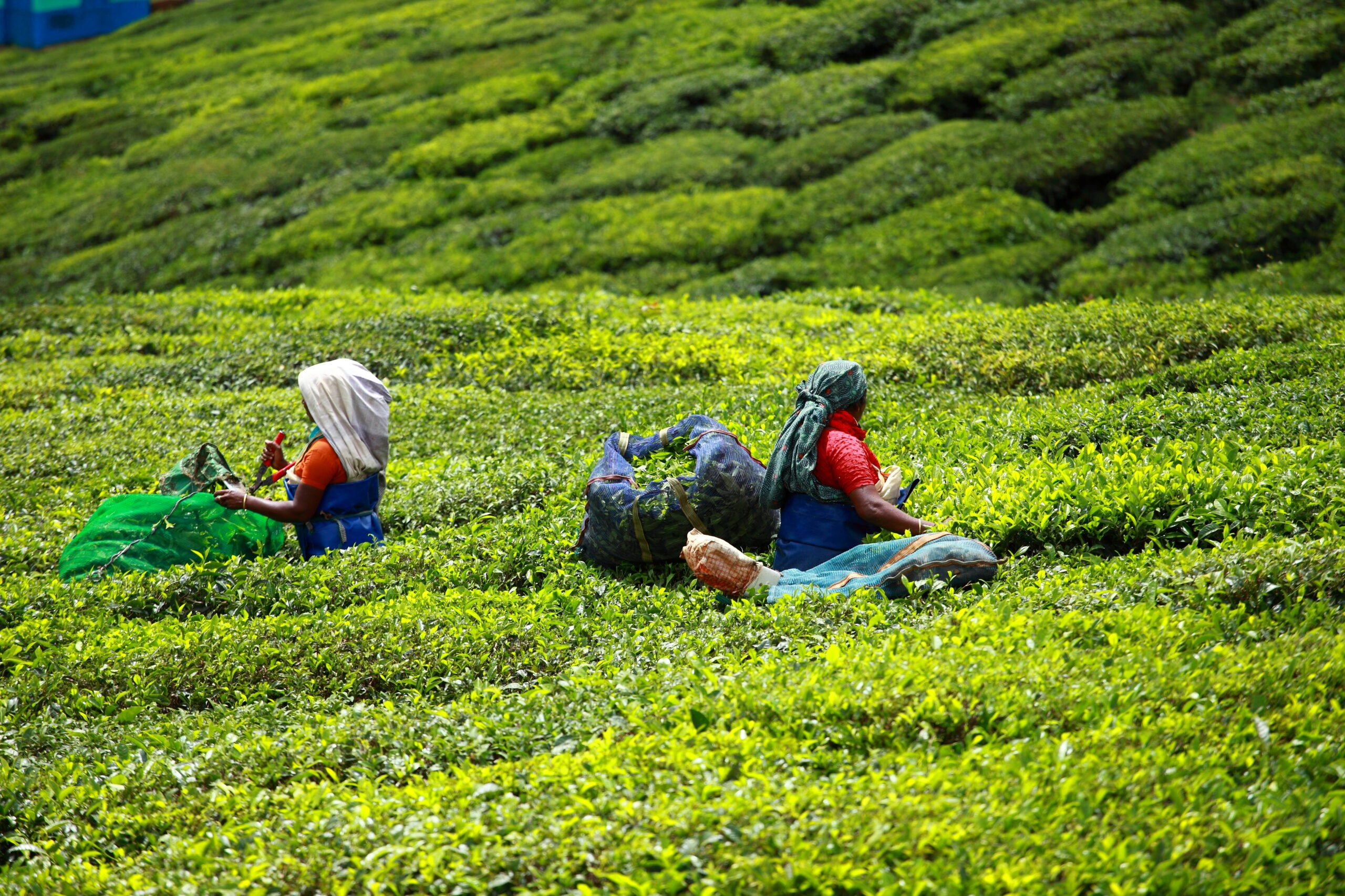 Learn About The Ecology & Culture Of Munnar In Our 5 Day Ecology & Culture Tour Of Munnar