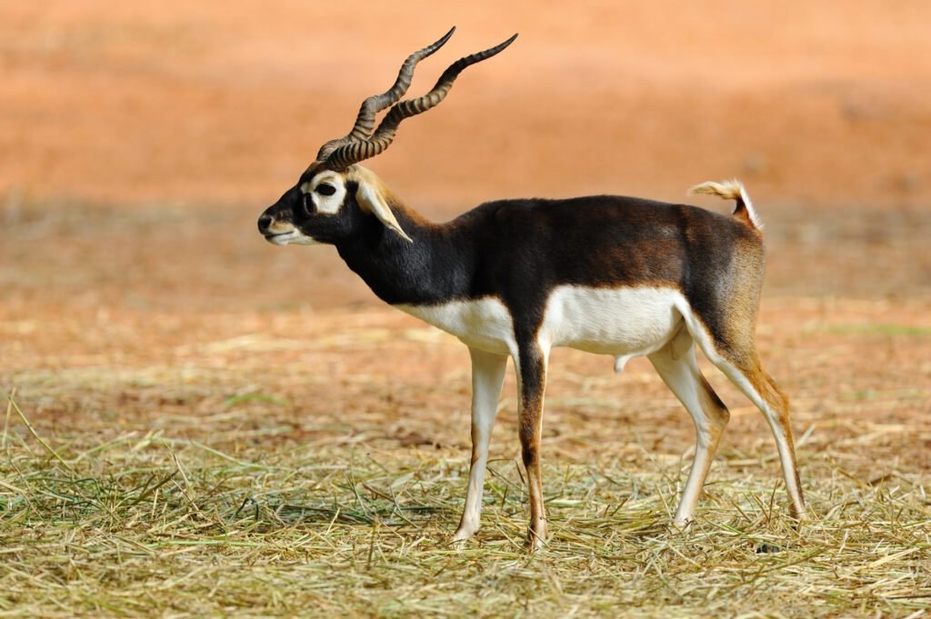 2 Days in Chennai Wildlife Tour