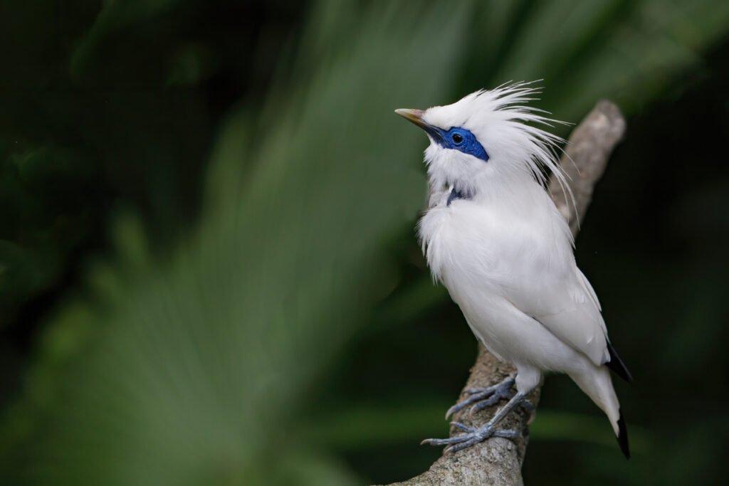 bird watching best things to do penida island