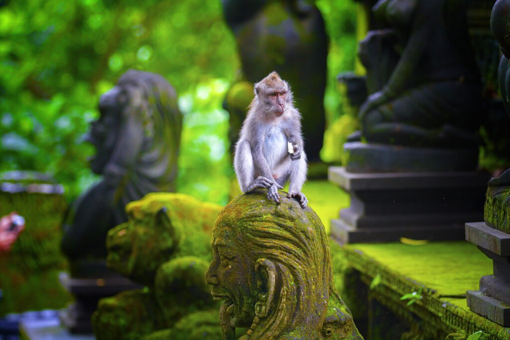 Best Things to do in Bali Monkey tour
