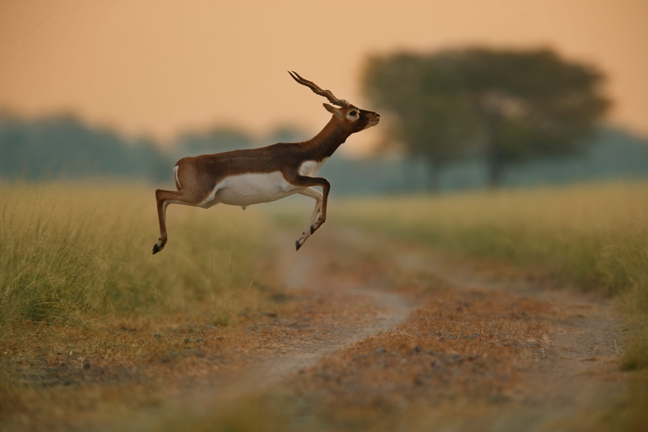 Visit The Home To A Healthy Population Of Blackbuck In Our 2 Day Legacy Of Sultans & Wildlife Tour In Bidar
