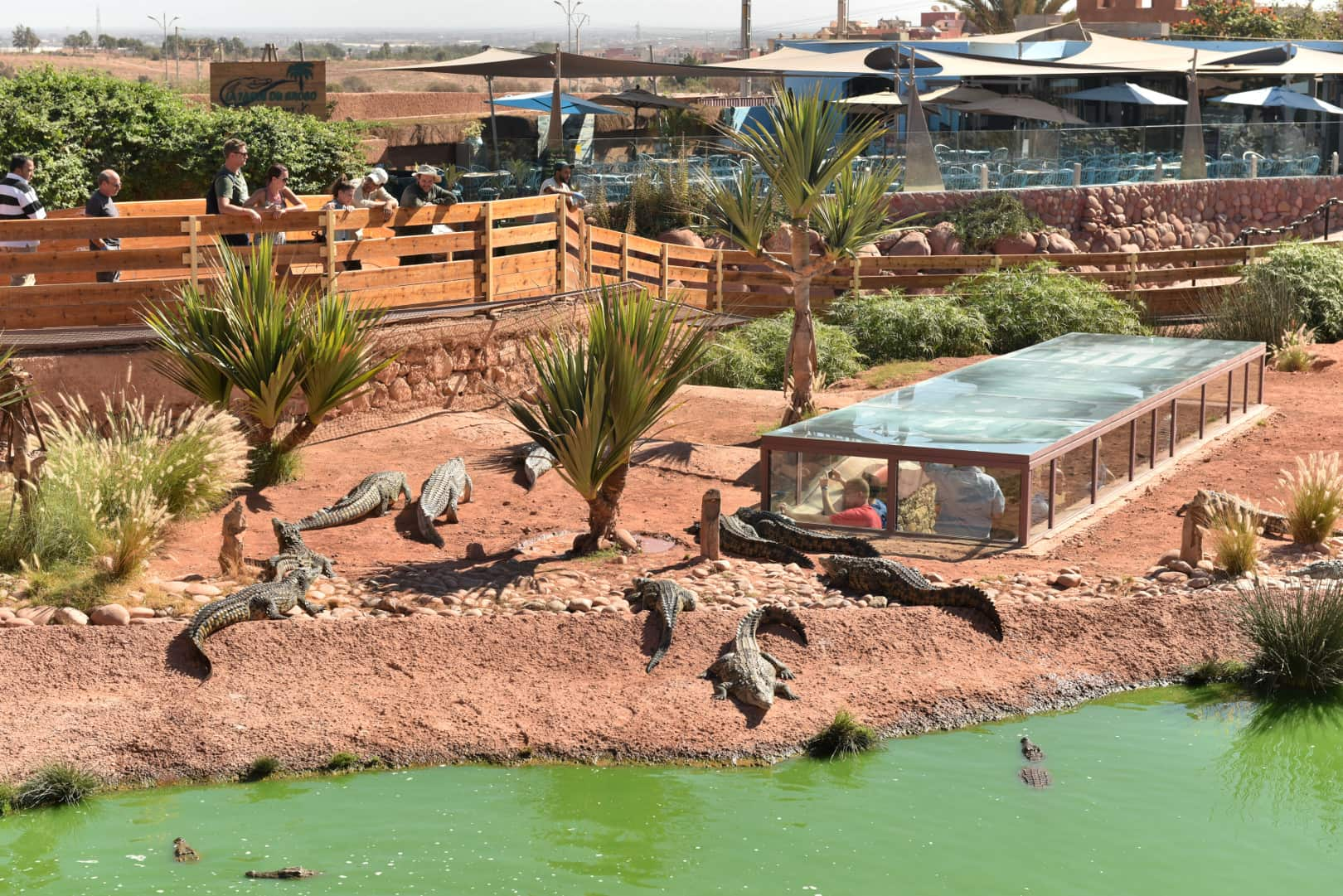 Discover The Crocopark On The Agadir Tour From Marrakesh_100