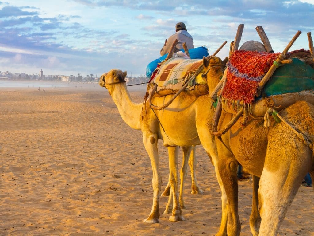 Trek with camels for a unique perspective of Marrakesh and around