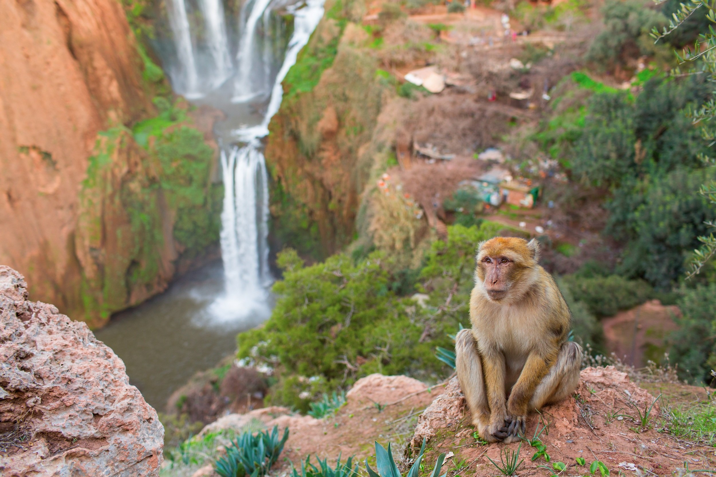 Explore The Flora & Fauna Around The Waterfall On The Ouzoud Waterfalls Tour From Marrakesh