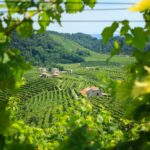 Join The Prosecco Tasting Tour From Venice