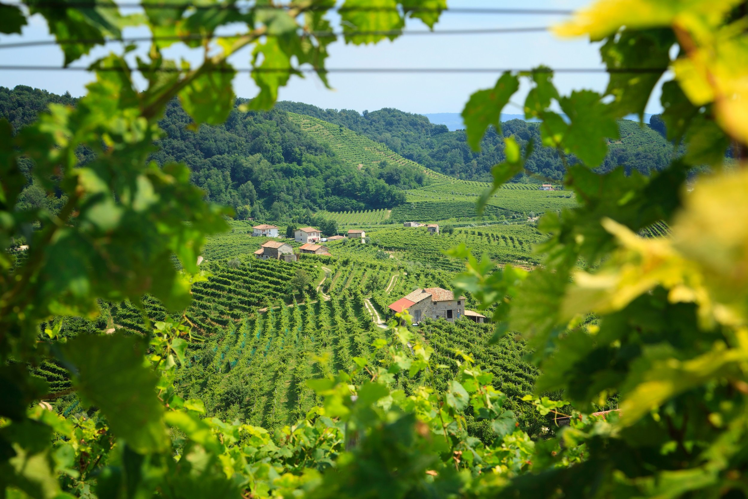 Join The Prosecco Tasting Tour From Venice On The 13 Day Italy Food & Wine Journey Tour Package