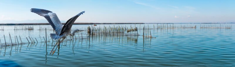 Discover Albufera Lake In Our Lake Albufera Tour From Valencia.jpg