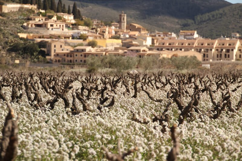 Discover Spain Countryside In Our Valencia Wine Tour
