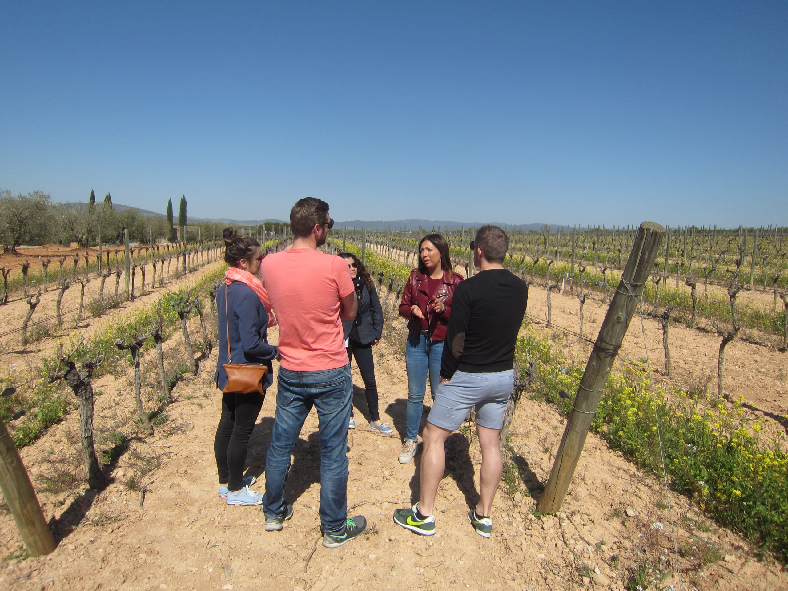 Discover The History Of Valencia's Wine In Our Half Day Wine Tour In Valencia