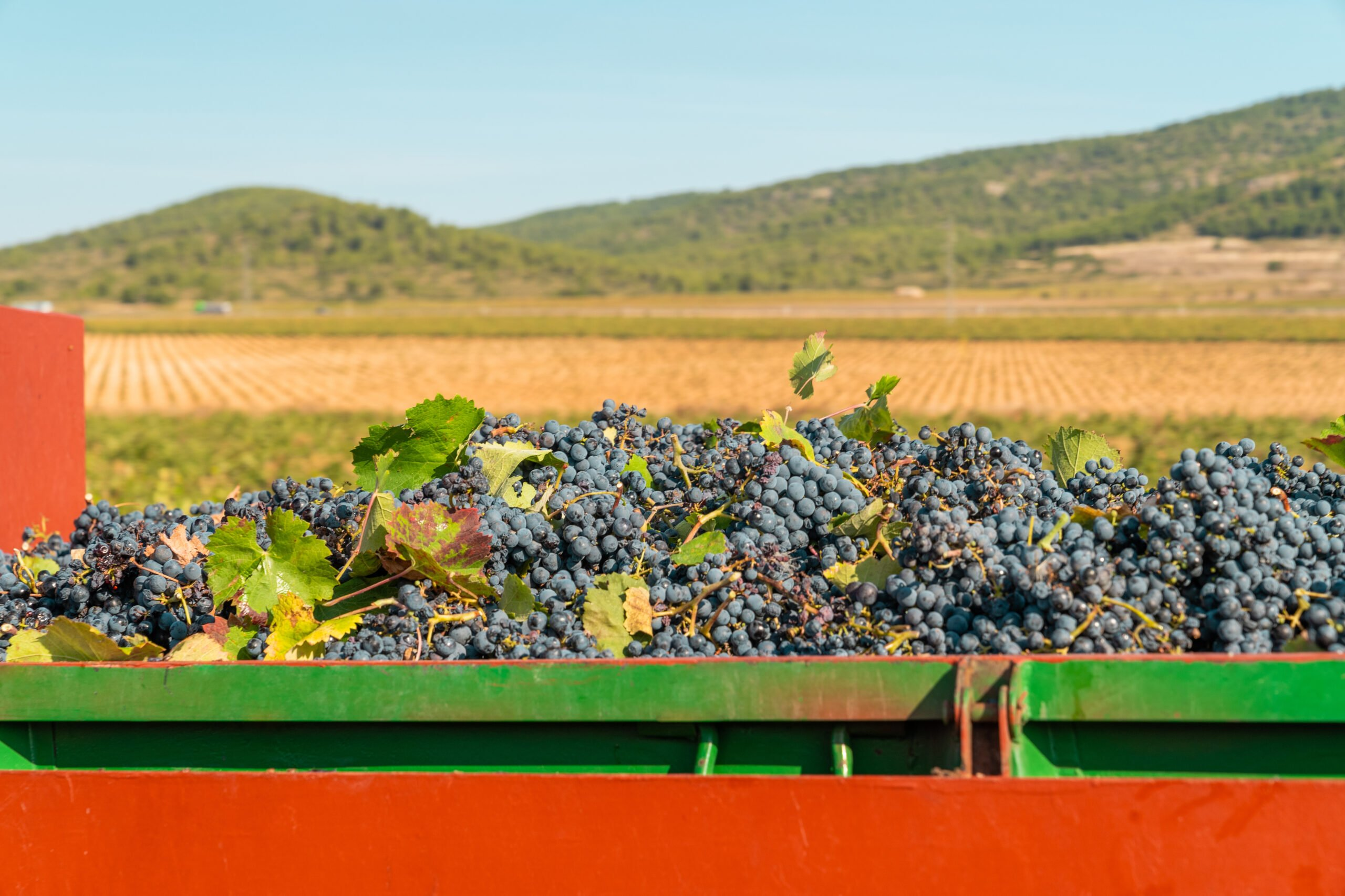 Discover The Village Of Requena In Our Valencia Wine Tour