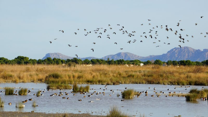 Great Views In Our Lake Albufera Tour From Valencia