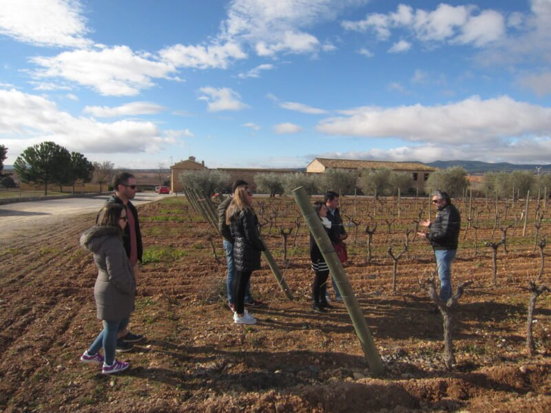 Learn About The Grape Varieties In Our Half Day Wine Tour In Valencia