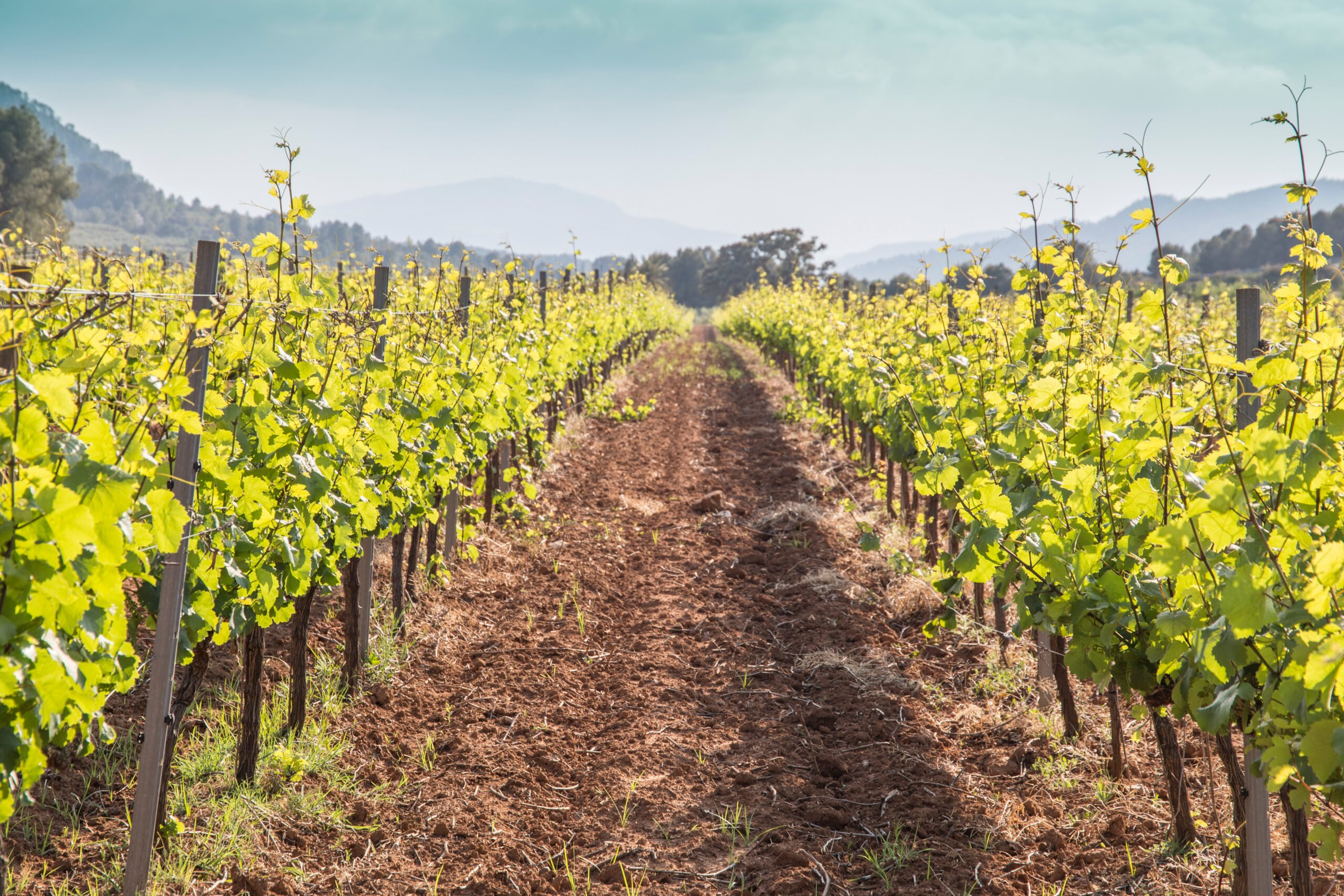 Learn About Valencia's Wines In Our Half Day Wine Tour In Valencia