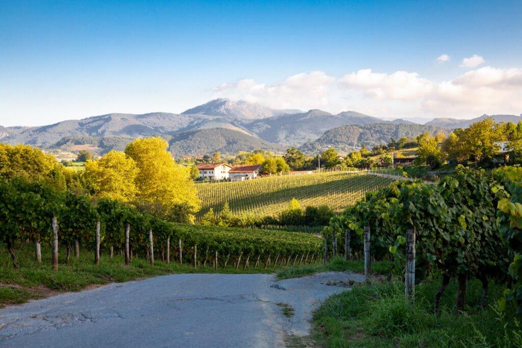 Spanish Wine Country Txakoli