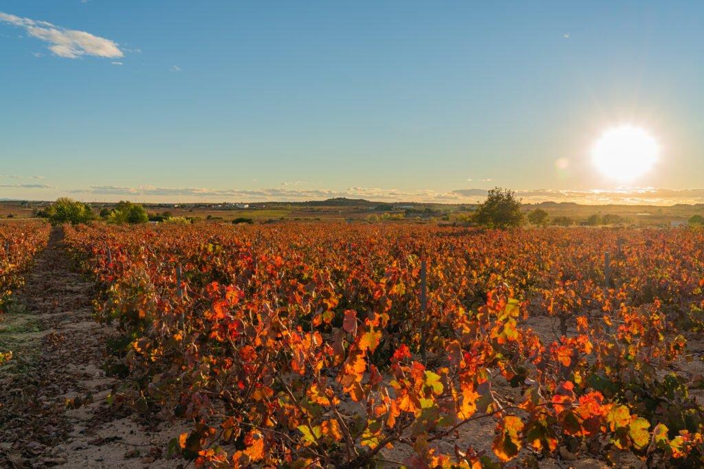 Valencia wine tour