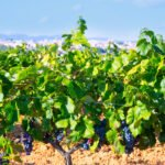 Visit Requena Wine Region In Our Half Day Wine Tour In Valencia