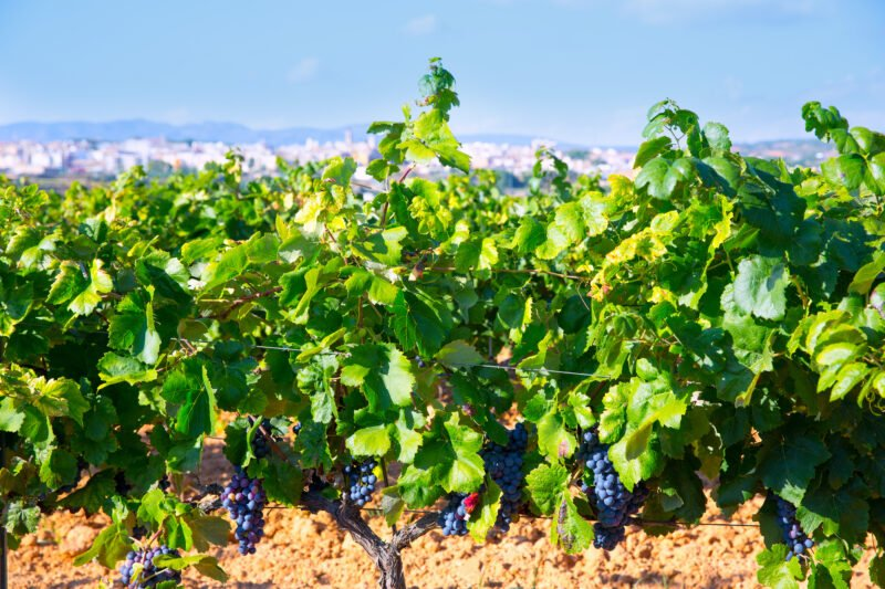 Visit Requena Wine Region In Our Half Day Wine Tour In Valencia