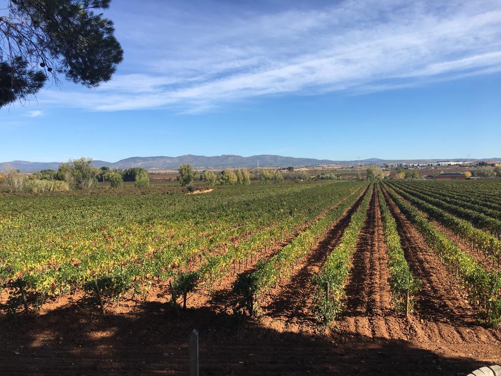 Wine Tastig In Our Half Day Wine Tour In Valencia
