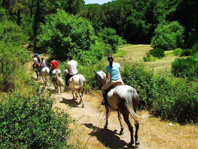 Chianti Hillside Horseback Riding Tour From Siena_109_2