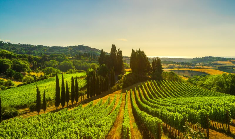 Frascati Wine Tasting Tour & Lunch From Rome_110_1