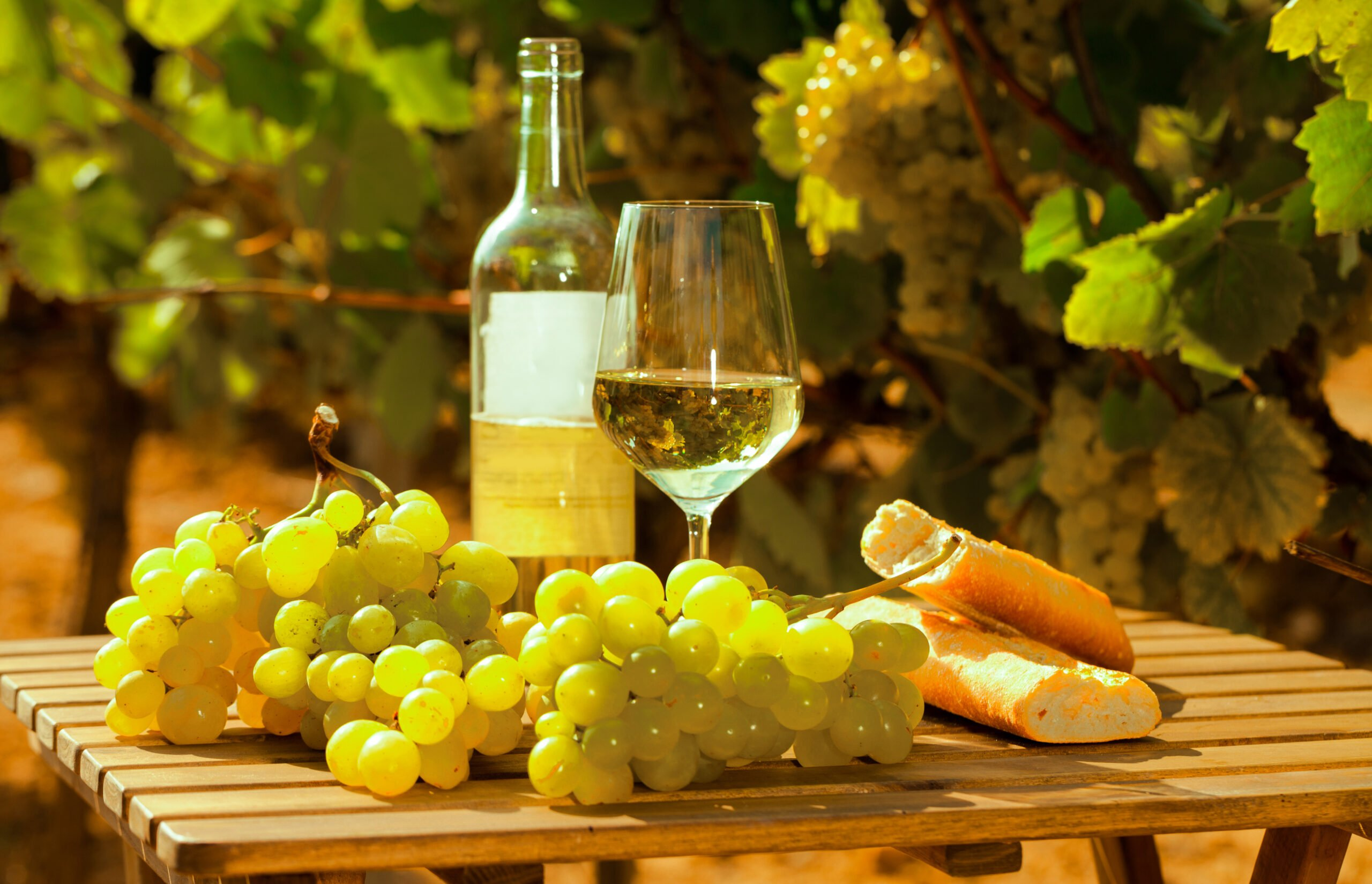Frascati Wine Tasting Tour & Lunch From Rome_110_4