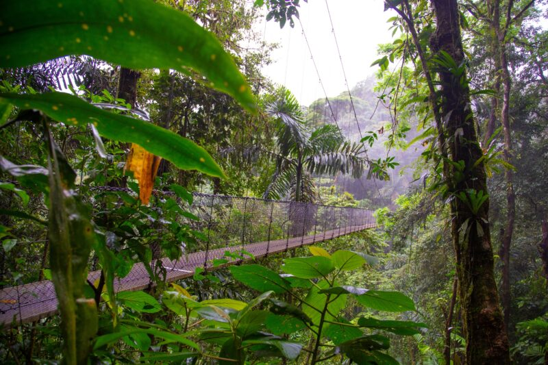 Hanging Bridges, La Fortuna Waterfall And Arenal Volcano Hiking Tour From La Fortuna & Arenal