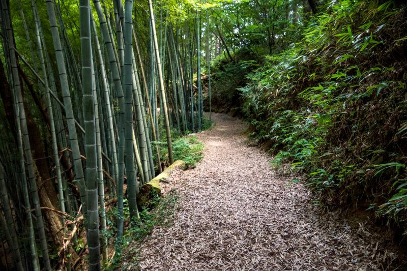 Hike The Historic Path Of Nakasendo Starting From Magome On The 10 Day Samurai Experience Package Tour