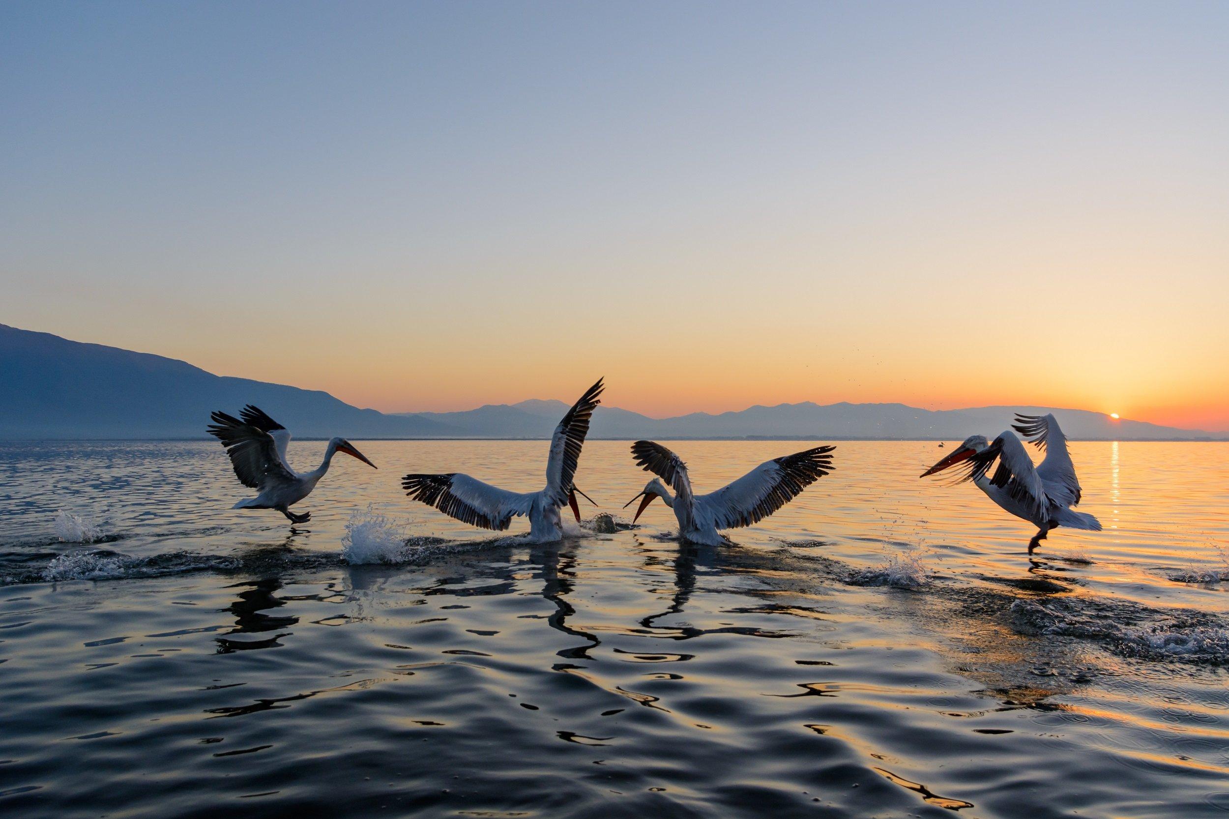 Join Our Kerkini Lake-ecotour From Thessaloniki