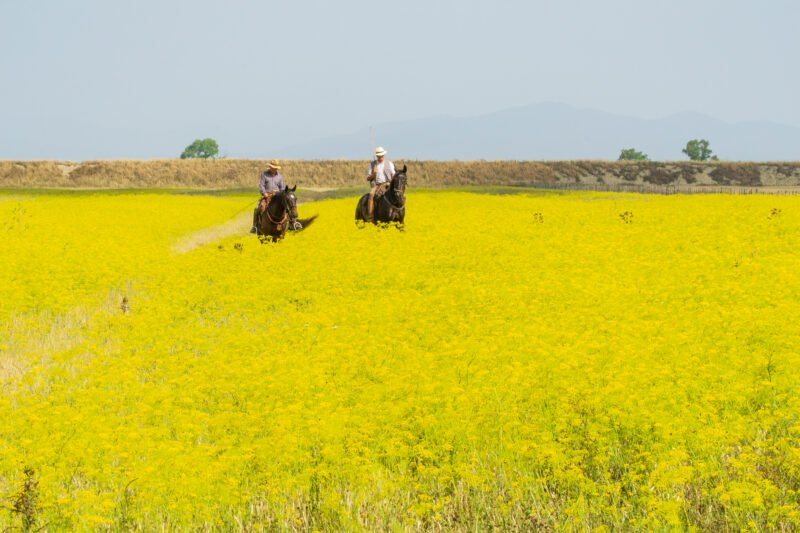 Join The Chianti Hillside Horseback Riding Tour From Siena