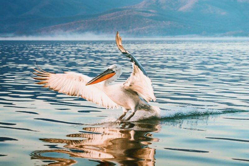 Kerkini Lake-ecotour From Thessaloniki_116_2