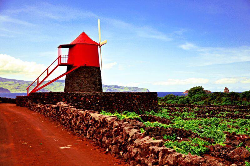 Pico Island Tour From Madalena_4