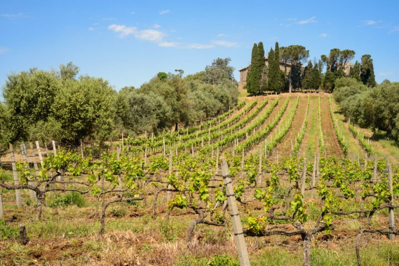 Roman Vineyard & Wine Tasting Experience From Rome_110