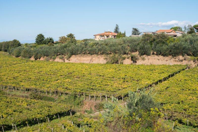 Roman Vineyard & Wine Tasting Experience From Rome_110_1