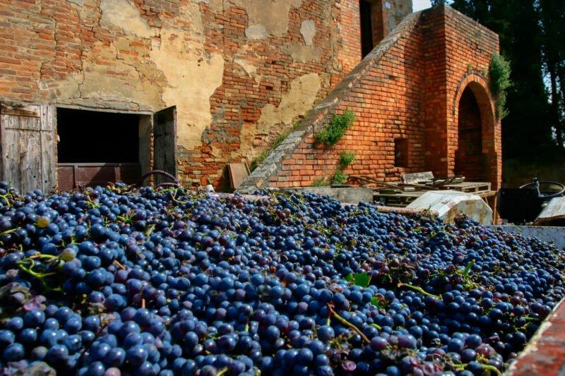 Roman Vineyard & Wine Tasting Experience From Rome_110_2
