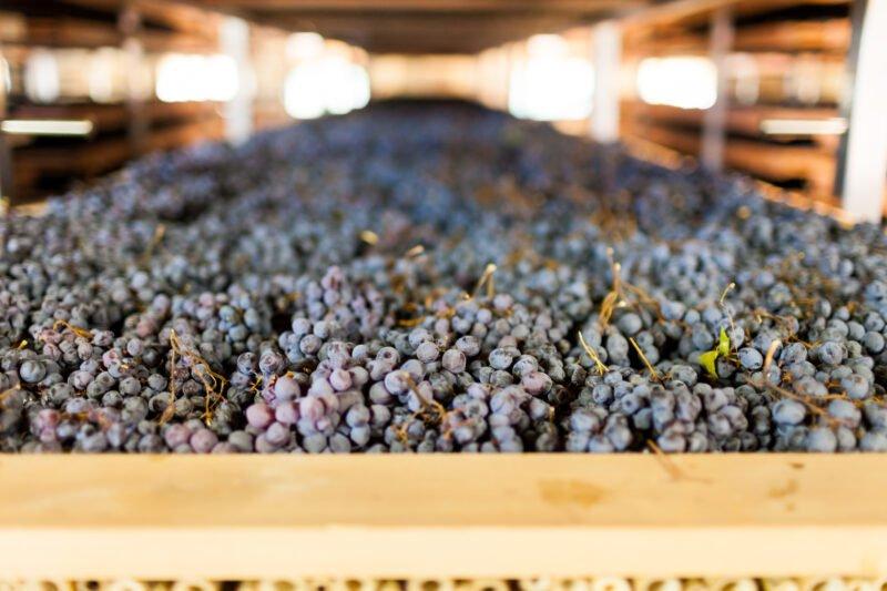 Roman Vineyard & Wine Tasting Experience From Rome_110_3